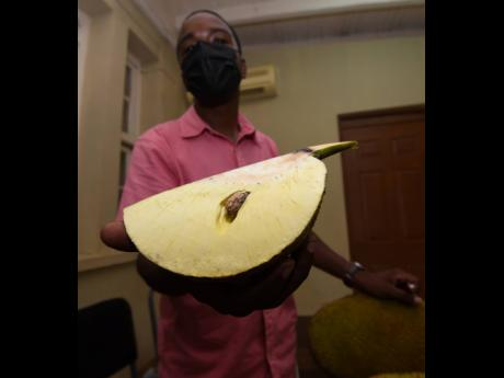 Gray shows off a breadfruit variety called ulufiti.